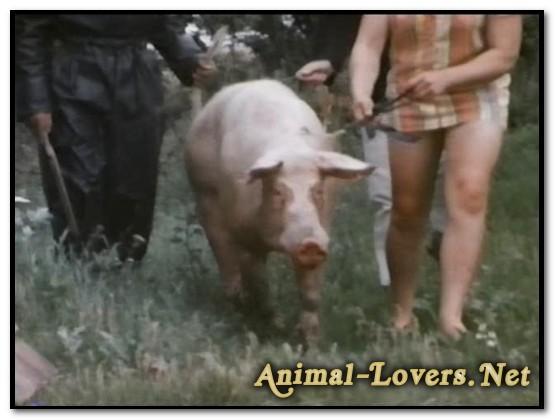 Bodil Joensen - Animal Sex Pornstars - Bodil Joensen