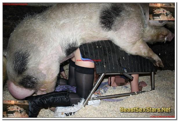 006 - Beast Photos - Animal Sex Pics - Beastiality Images